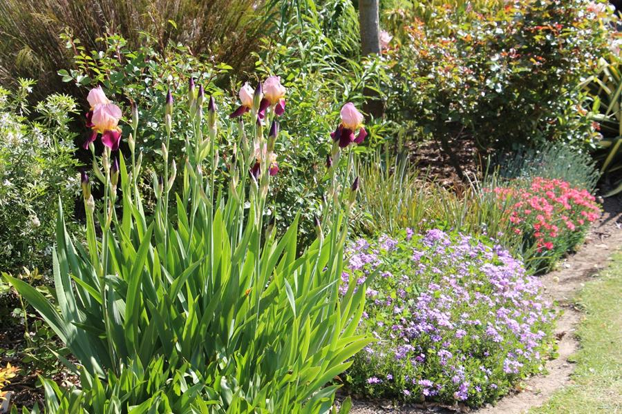 Parva Plants Gallery Mail Order Plants And Bulbs