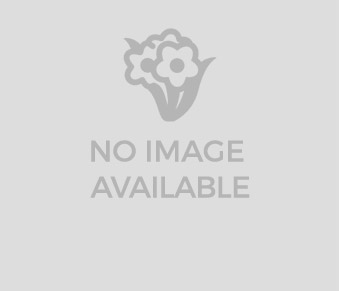 Parva Plants: Mail Order Plants and Bulbs | Online Plant Shop